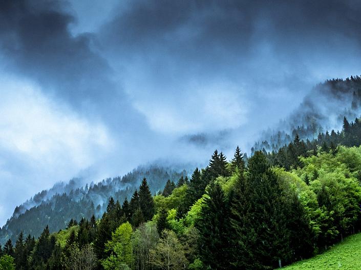 Visit Green Wood